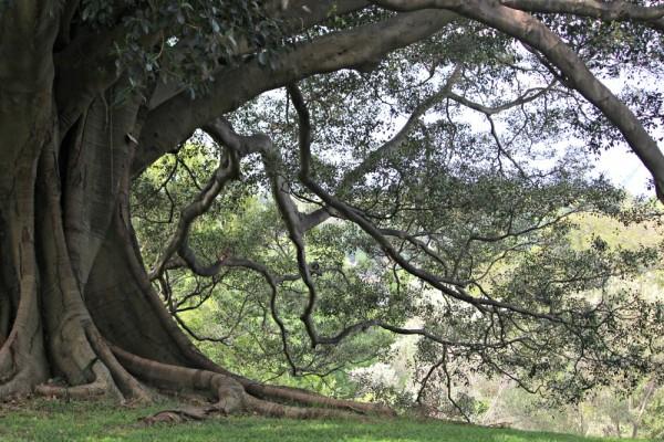 Botanic Gardens walk Sydney