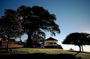 Obsevatory Hill tree