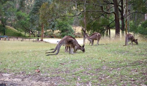 One of the best camping spots near sydney for wildlife sighting