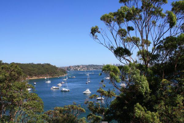 Taylor's Bay - Sydney Harbour National Park