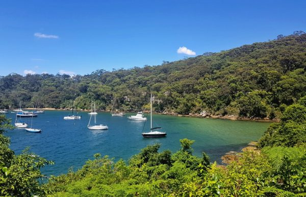 Taylors Bay Sydney Harbour National Park
