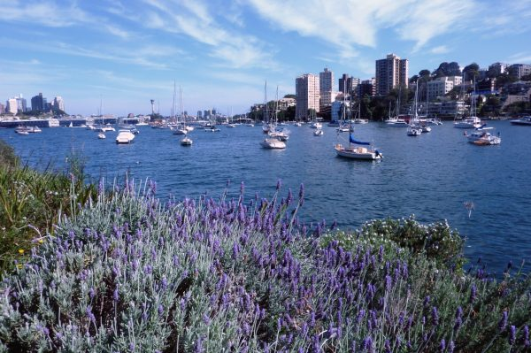 Lavender Bay Lavender Milson's Point Walk Sydney