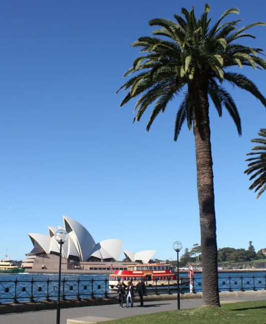 best photos of the Sydney Opera House with a palm tree
