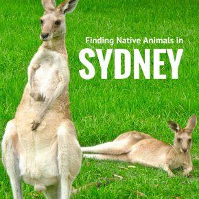 where to find australian animals in Sydney