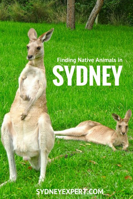 where to find australian animals in Sydney