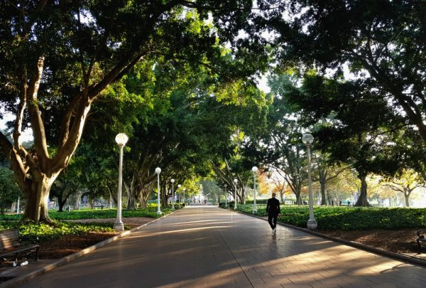 Hyde Park Sydney Avenue of Fig Trees