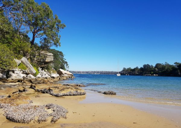 Collins Beach Manly