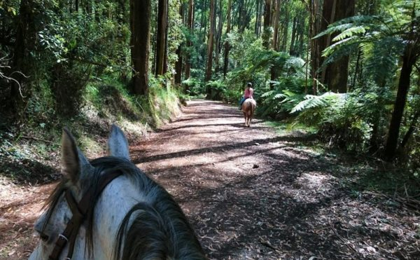 Horseriding in the Blue Mountains