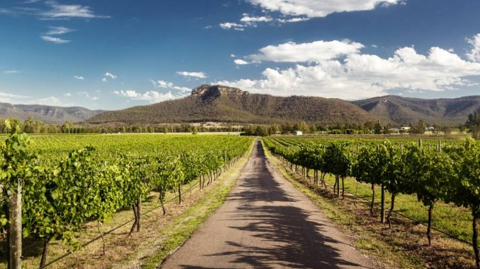 View of Hunter Valley vineyards, NSW, Australia