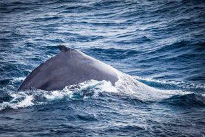 whale sydney harbour