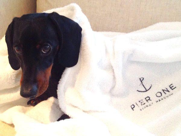 Dog friendly hotels in Sydney