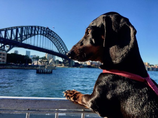 Take your dog on the harbour bridge