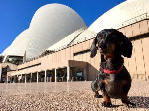 Sydney with your dog Opera House