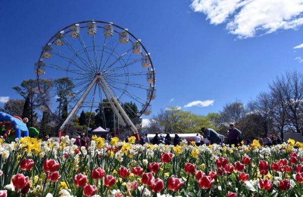 Ferris wheel at Floriafe flower festival in September