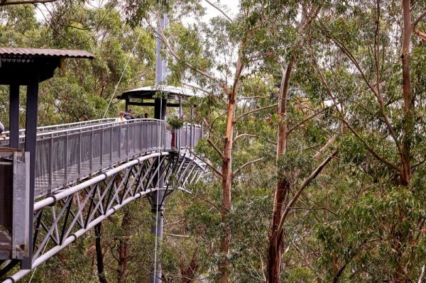 Visitors walking amongst the trees at Illawarra Fly Treetop Adventures, Knights Hill south of Wollongong.
