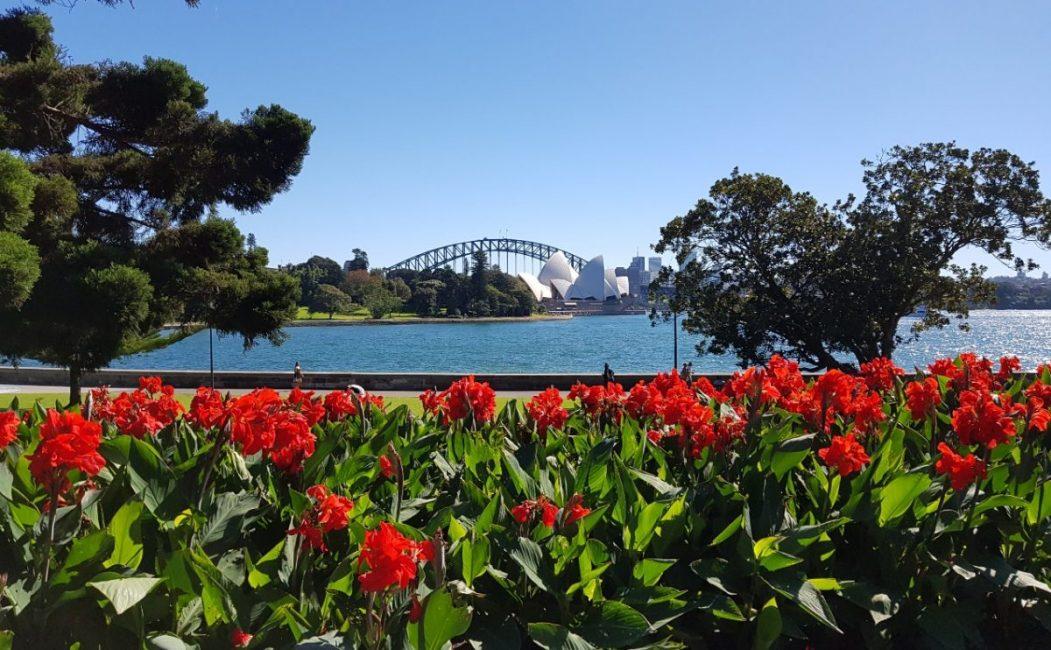 Royal Botanic Garden Sydney red flower view scaled - Closest Train Station To Royal Botanic Gardens Sydney