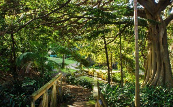 Ivanhoe Garden Manly