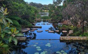 Sydney Park Wetlands Alexandria