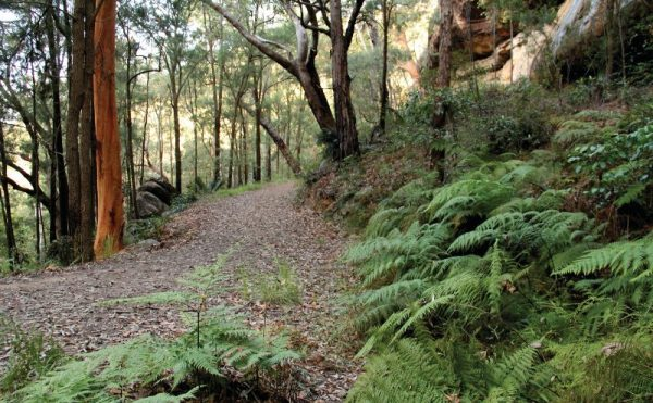 Patonga to Pearl Beach Walk