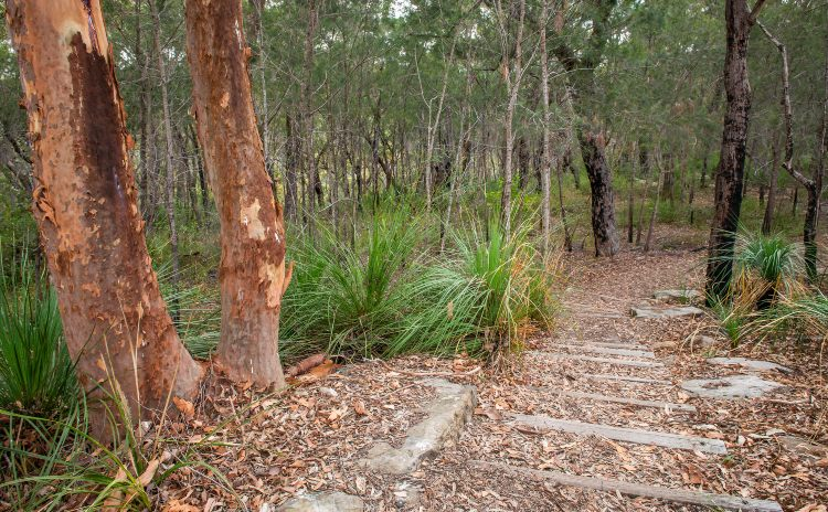 Lane Cove National Park Fiddens Track