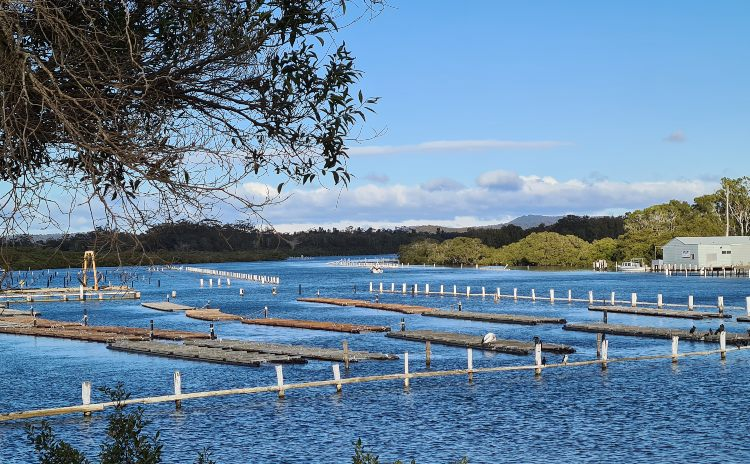 Forster Oyster Leases