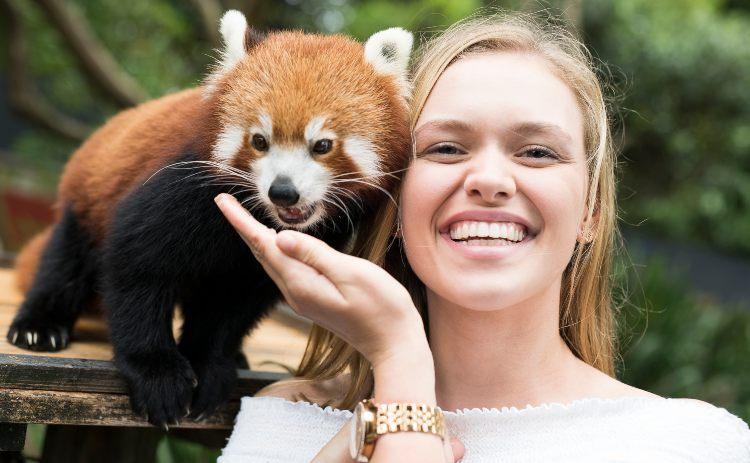 Symbio Wildlife Park Panda