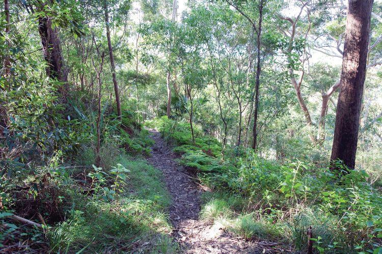 Wodi Wodi is one of the best walks in Wollongong