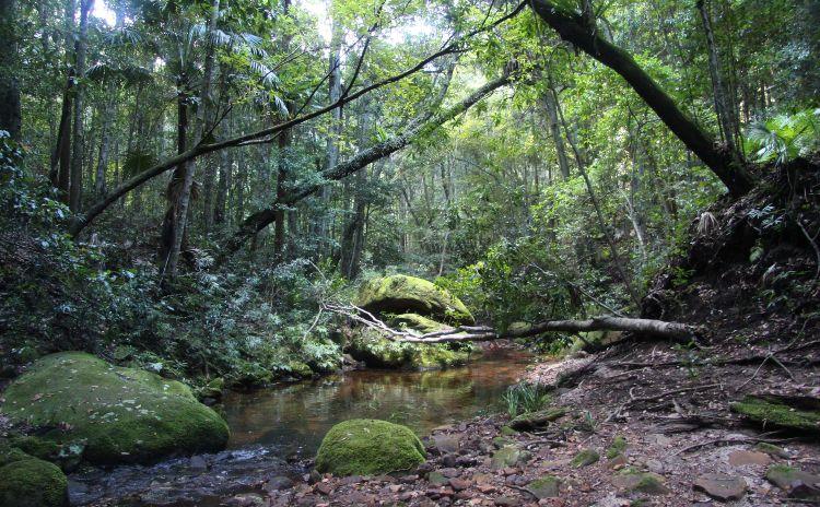 Royal National Park Forest Walk